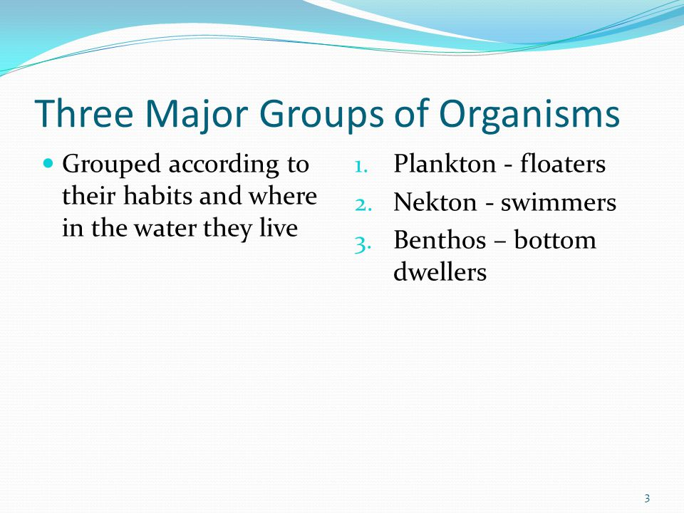 Three Major Groups of Organisms