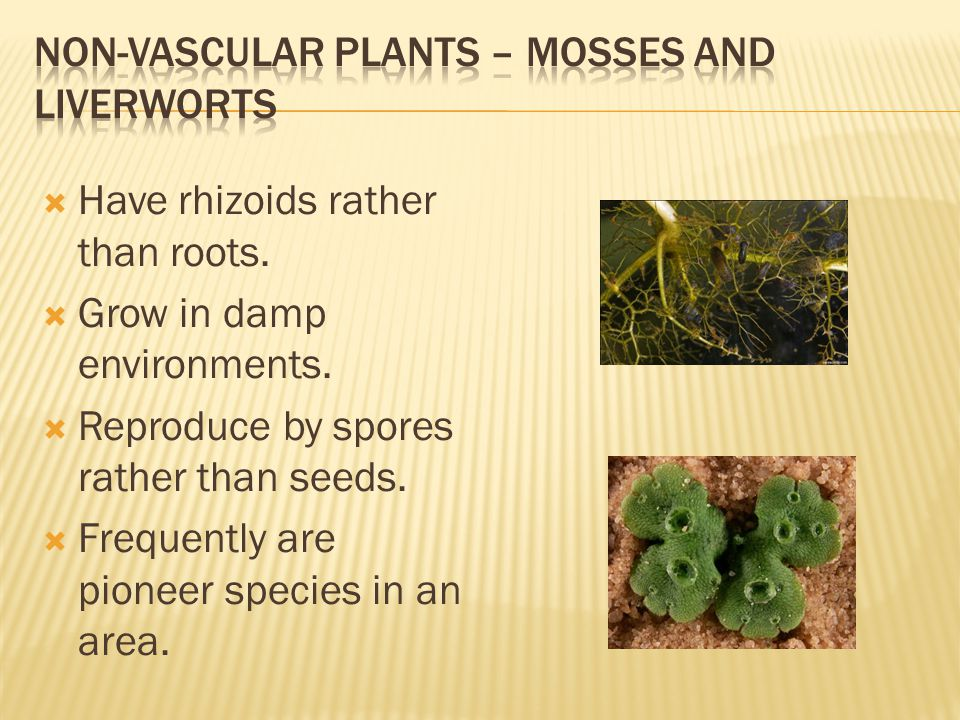 Non-Vascular Plants – Mosses and Liverworts