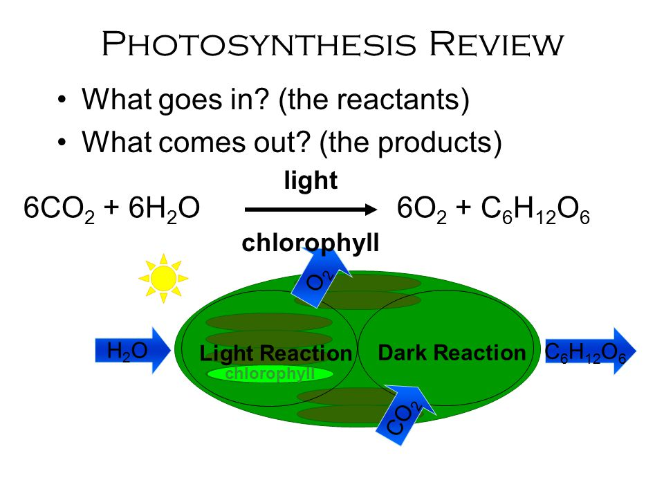 Starter: Notes and ws 77 Photosynthesis notes ...