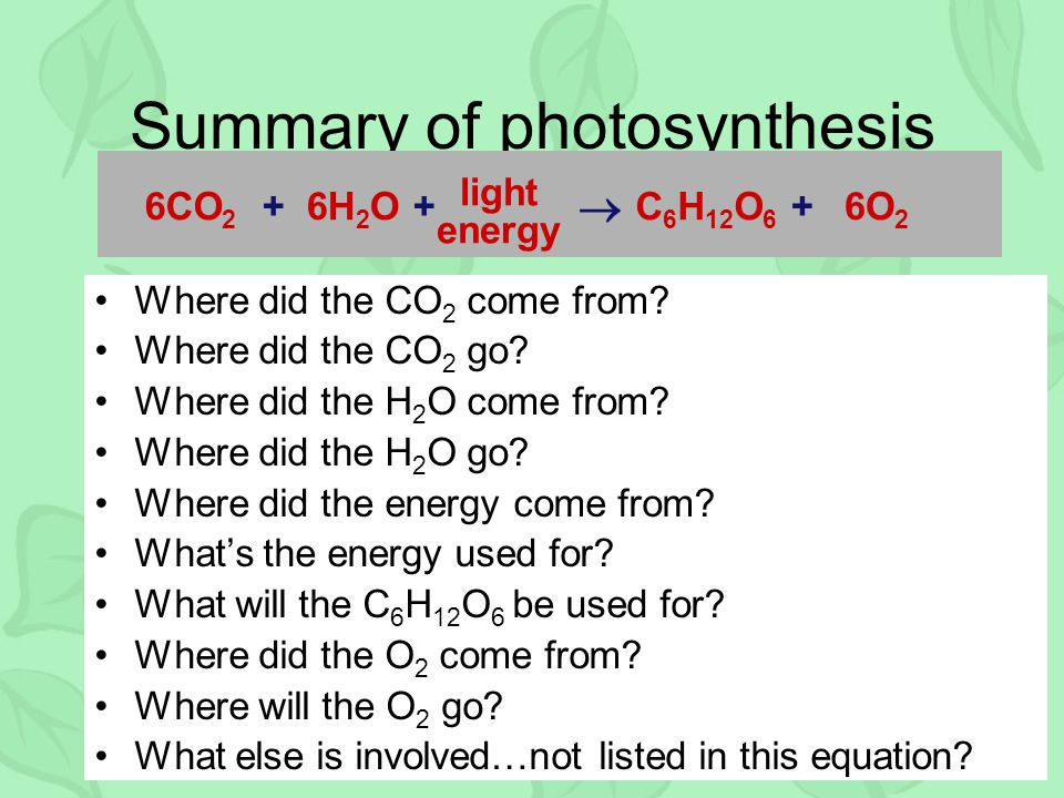 How Does Photosynthesis Work? A Simple Guide