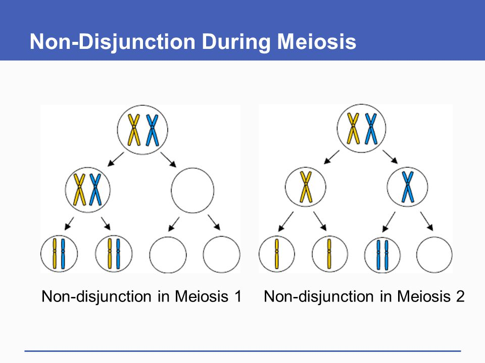 Non-Disjunction During Meiosis