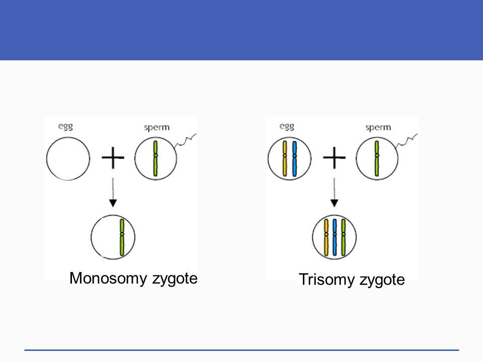 Monosomy zygote Trisomy zygote