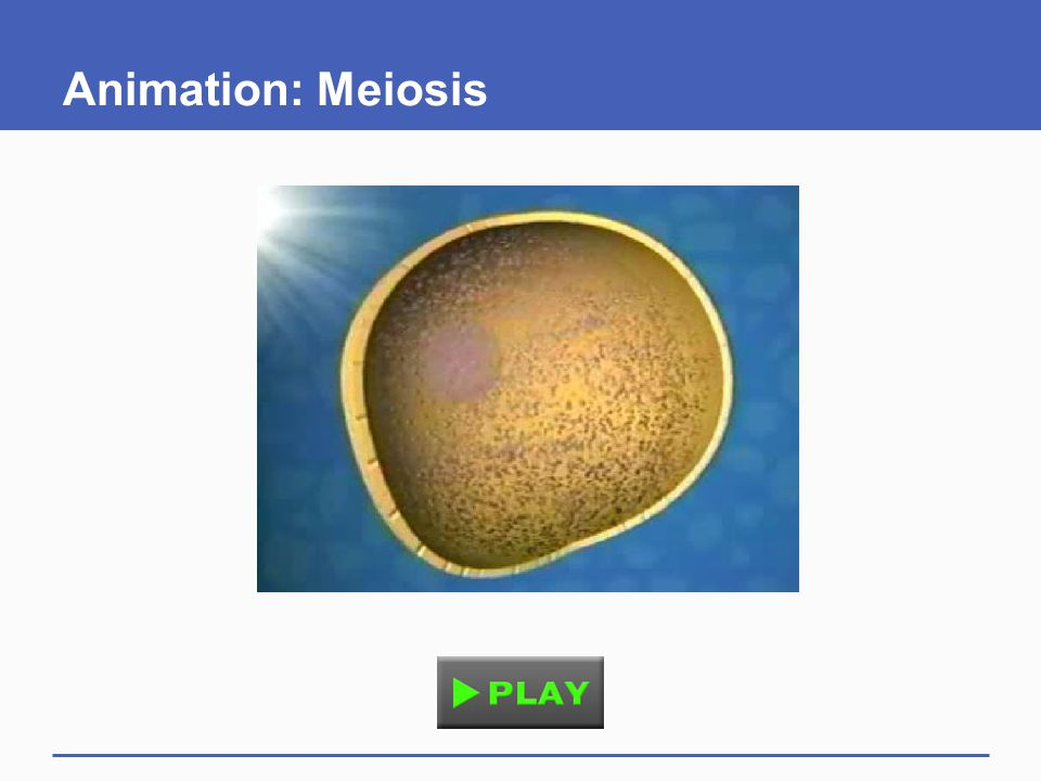 Animation: Meiosis