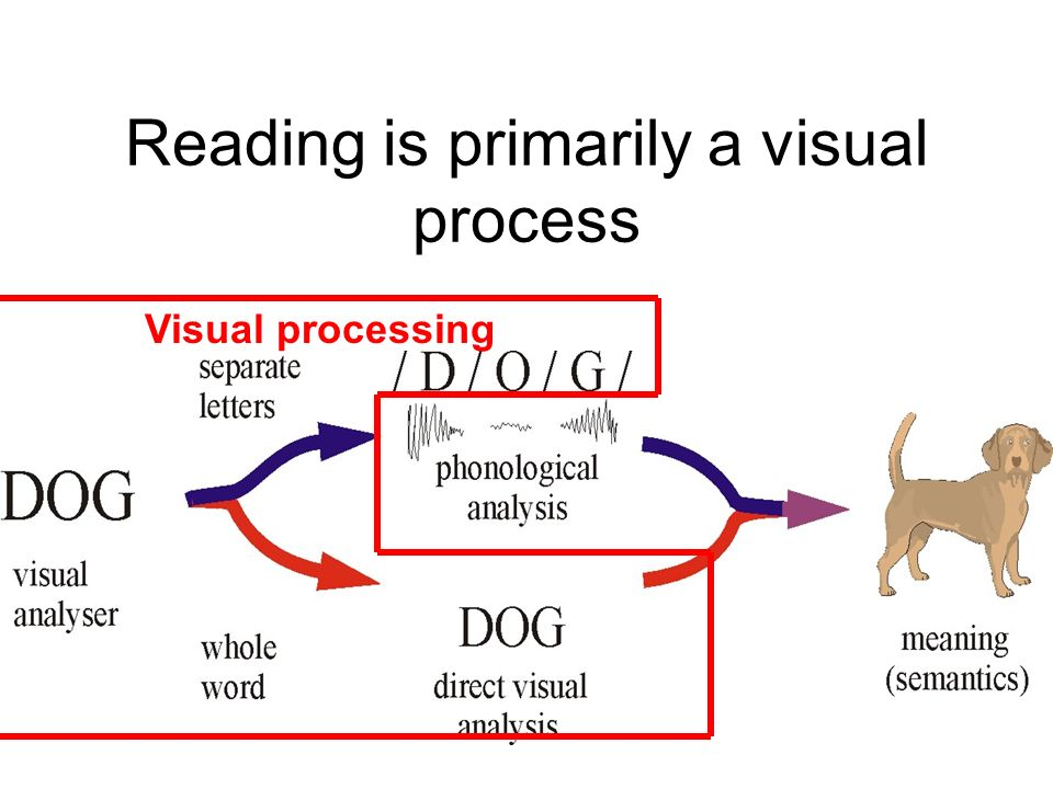 Reading is primarily a visual process
