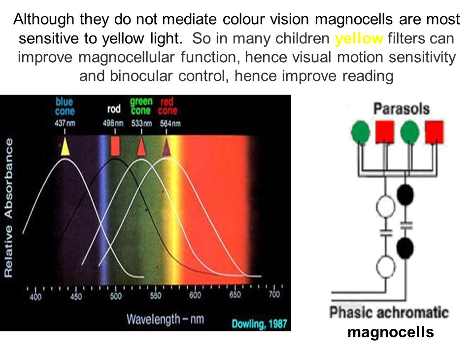 Although they do not mediate colour vision magnocells are most sensitive to yellow light. So in many children yellow filters can improve magnocellular function, hence visual motion sensitivity and binocular control, hence improve reading