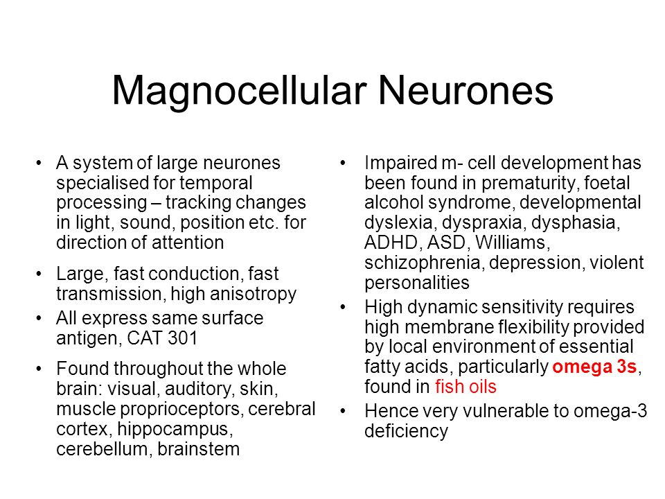 Magnocellular Neurones