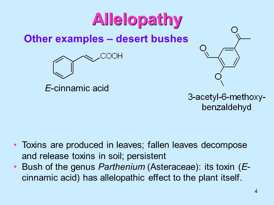 effect of allelopathy in plants Allelopathic impact of plants introduction  if allelopathy is involved, the effect of reducing the mass of invasive species may be much less predictable.