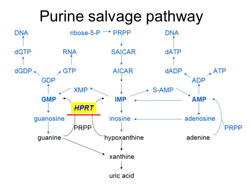 Nucleotide salvage  definition of Nucleotide salvage by