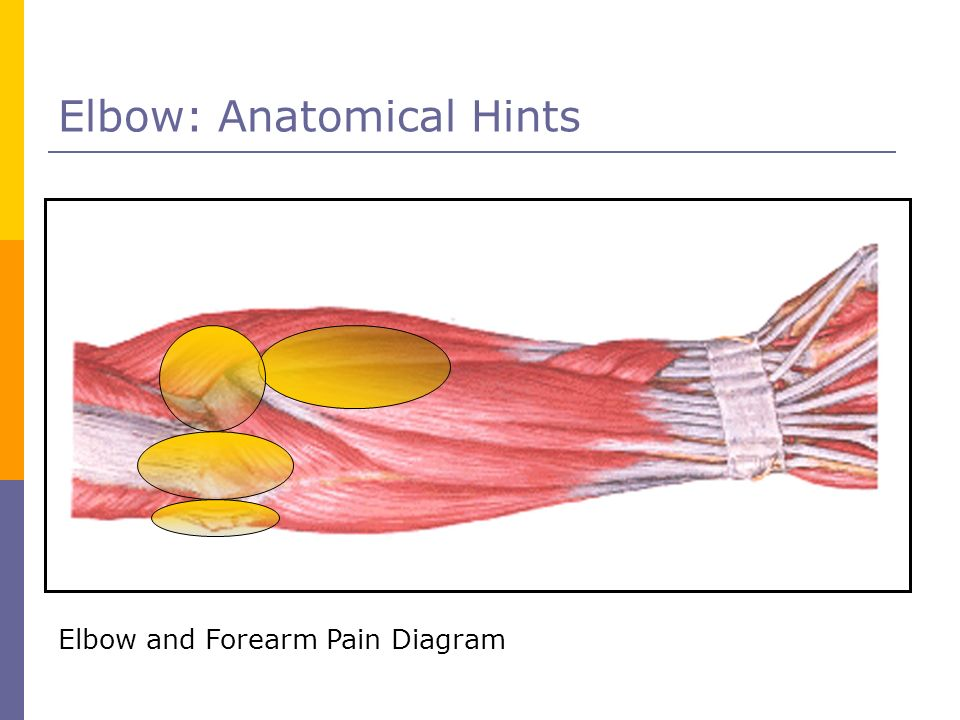 Elbow: Anatomical Hints