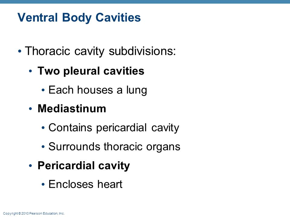 Thoracic cavity subdivisions: