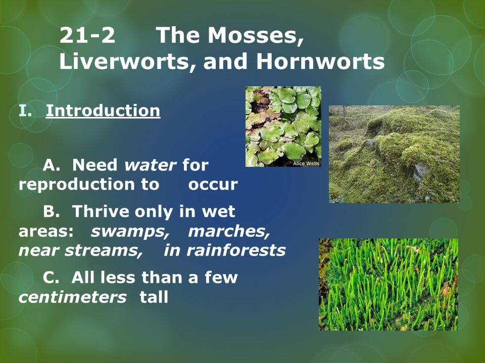 Plant Divisions: Mosses, Liverworts and Hornworts