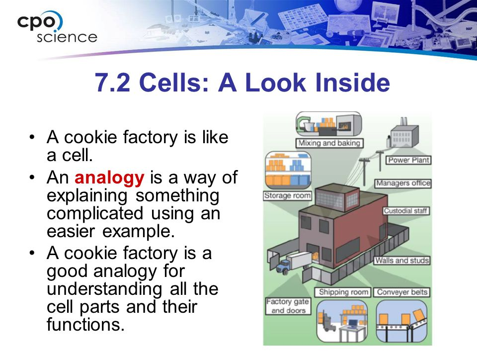 a look a the parts of a cell An adventure into cells and their parts halla publishing company wherever you look, there are living things cell parts with what you already know.