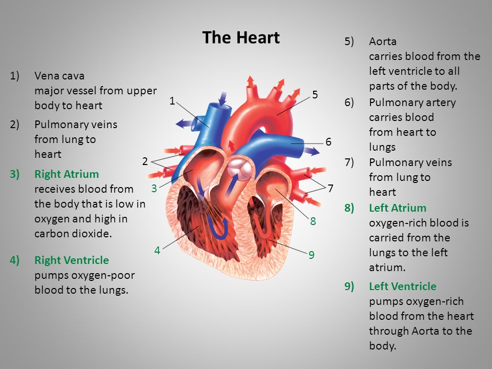 keeping your body healthy cardiovascular system ppt video online download. Black Bedroom Furniture Sets. Home Design Ideas