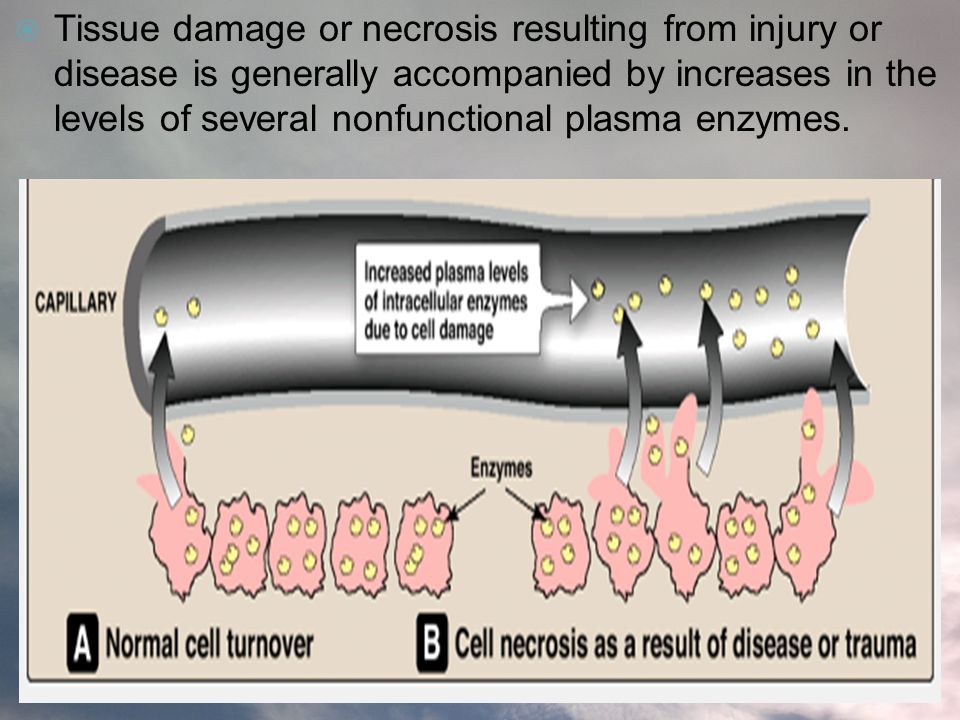 Tissue damage or necrosis resulting from injury or disease is generally accompanied by increases in the levels of several nonfunctional plasma enzymes.
