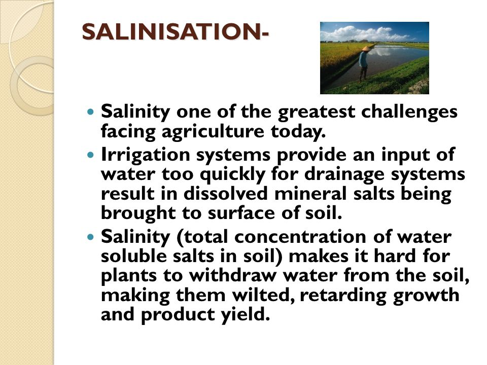 SALINISATION- Salinity one of the greatest challenges facing agriculture today.