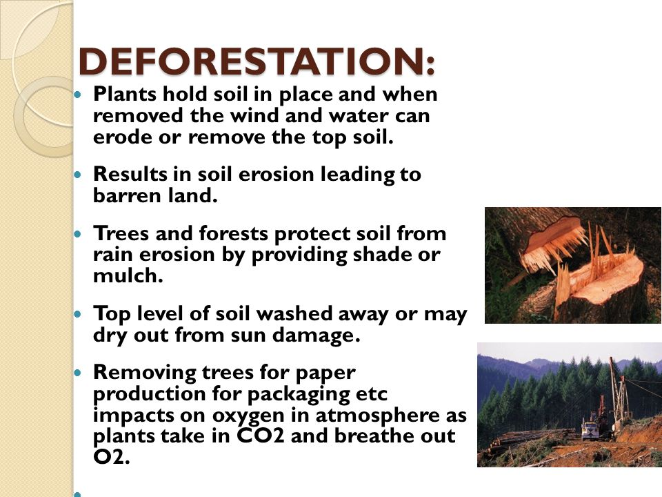 DEFORESTATION: Plants hold soil in place and when removed the wind and water can erode or remove the top soil.
