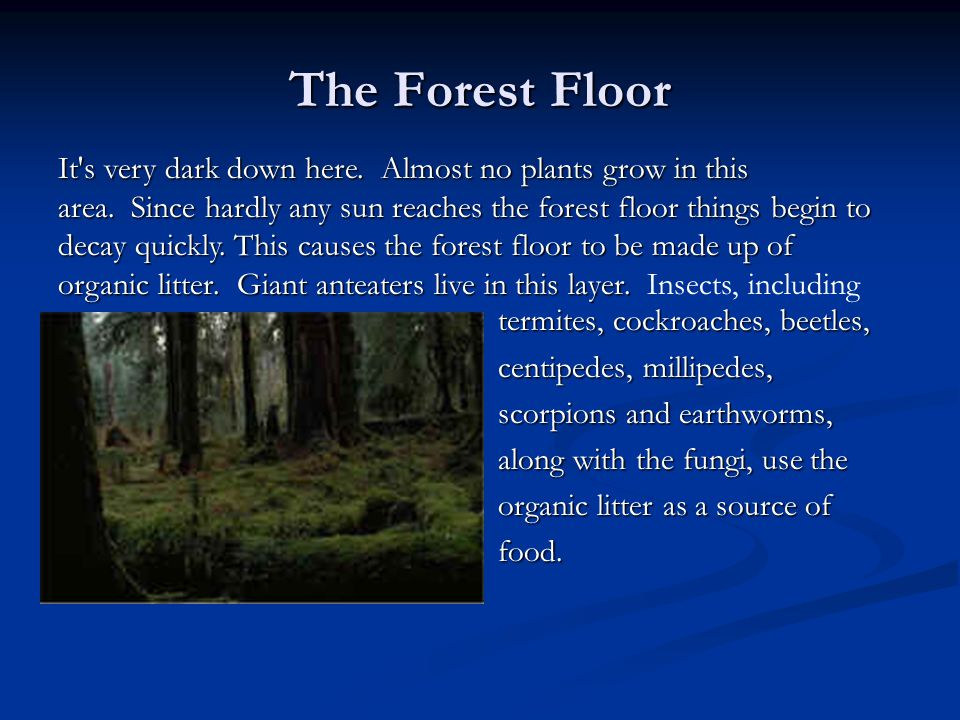 Layers of the rainforest ppt video online download for Forest floor definition