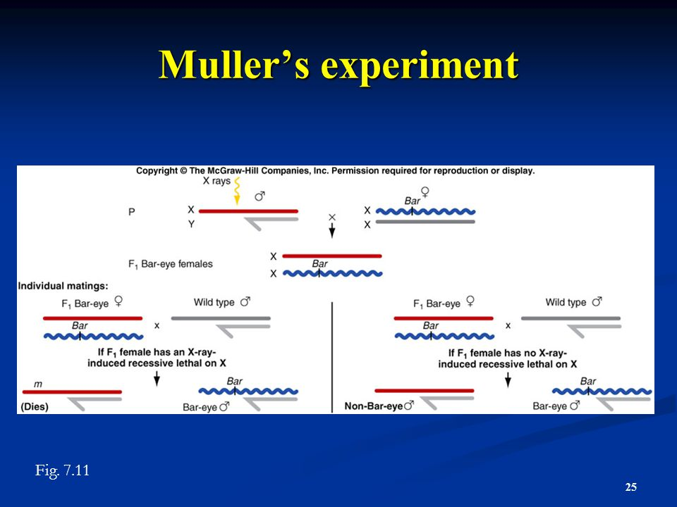 Muller's experiment Figure 7.11 Fig. 7.11