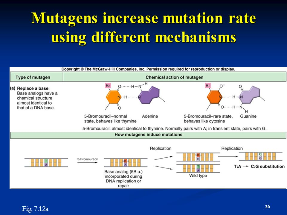 Mutagens increase mutation rate using different mechanisms