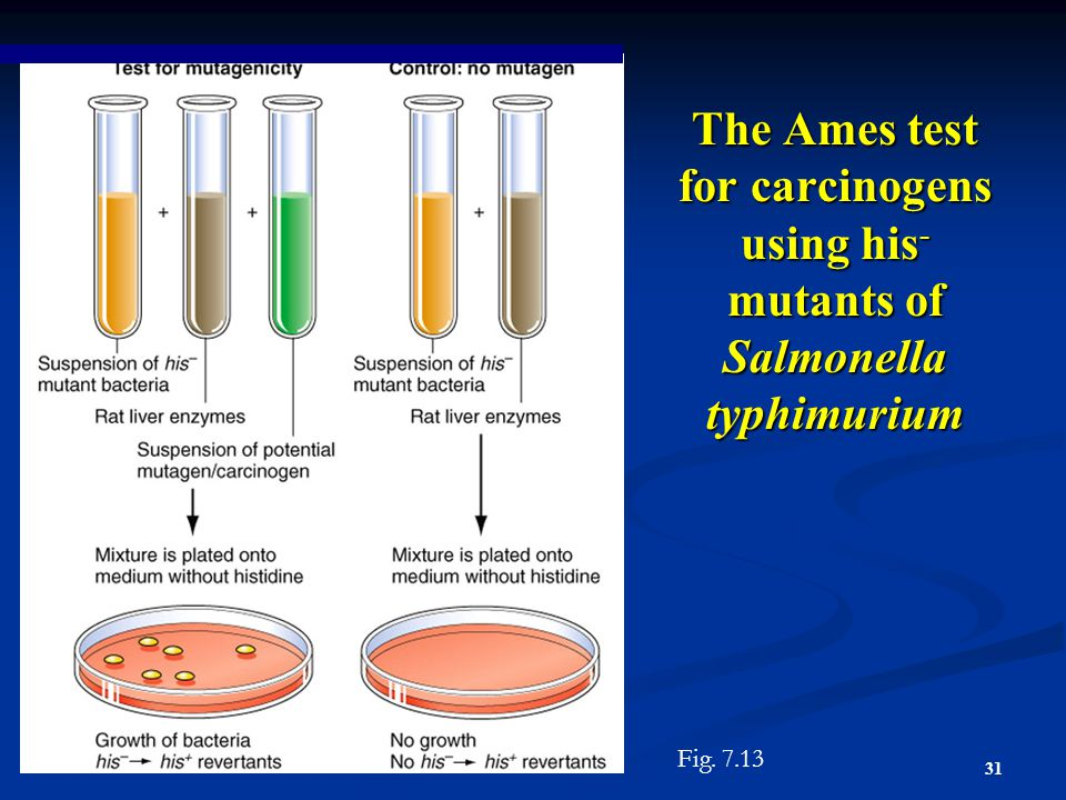 The Ames test for carcinogens using his- mutants of Salmonella typhimurium