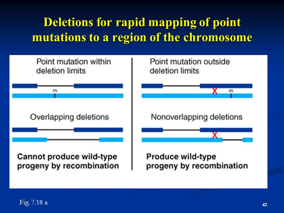 Deletions for rapid mapping of point mutations to a region of the chromosome