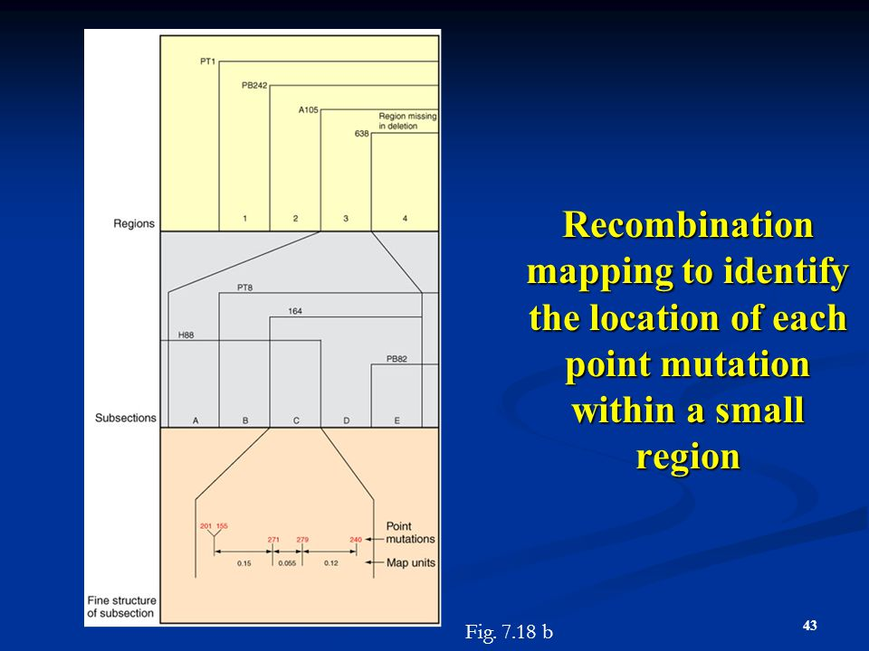 Recombination mapping to identify the location of each point mutation within a small region