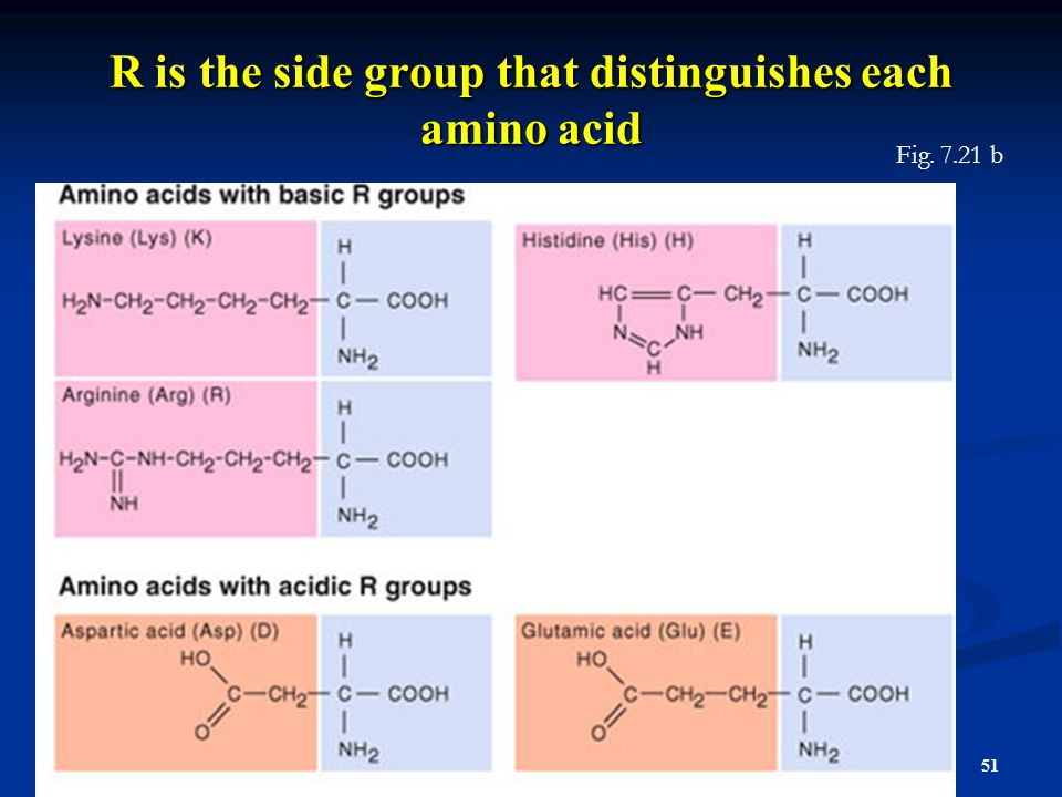 R is the side group that distinguishes each amino acid