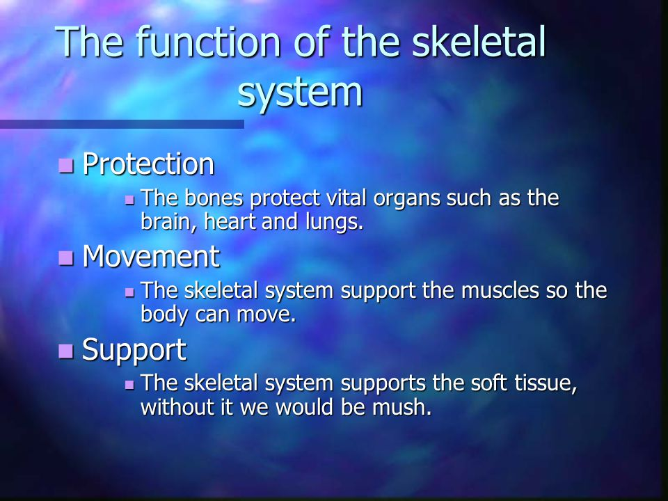 The function of the skeletal system