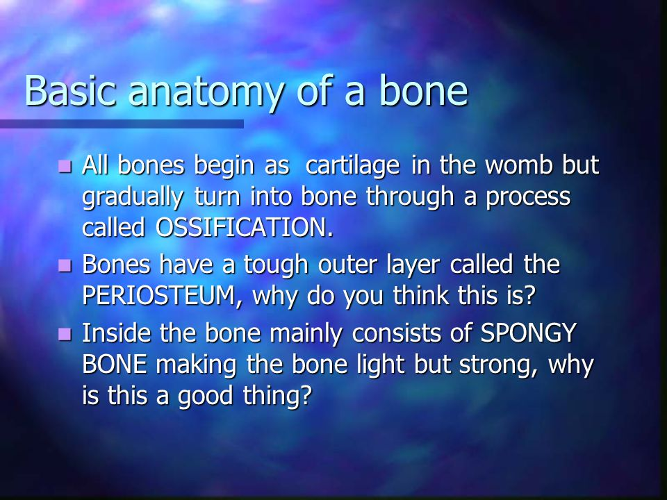 Basic anatomy of a bone All bones begin as cartilage in the womb but gradually turn into bone through a process called OSSIFICATION.