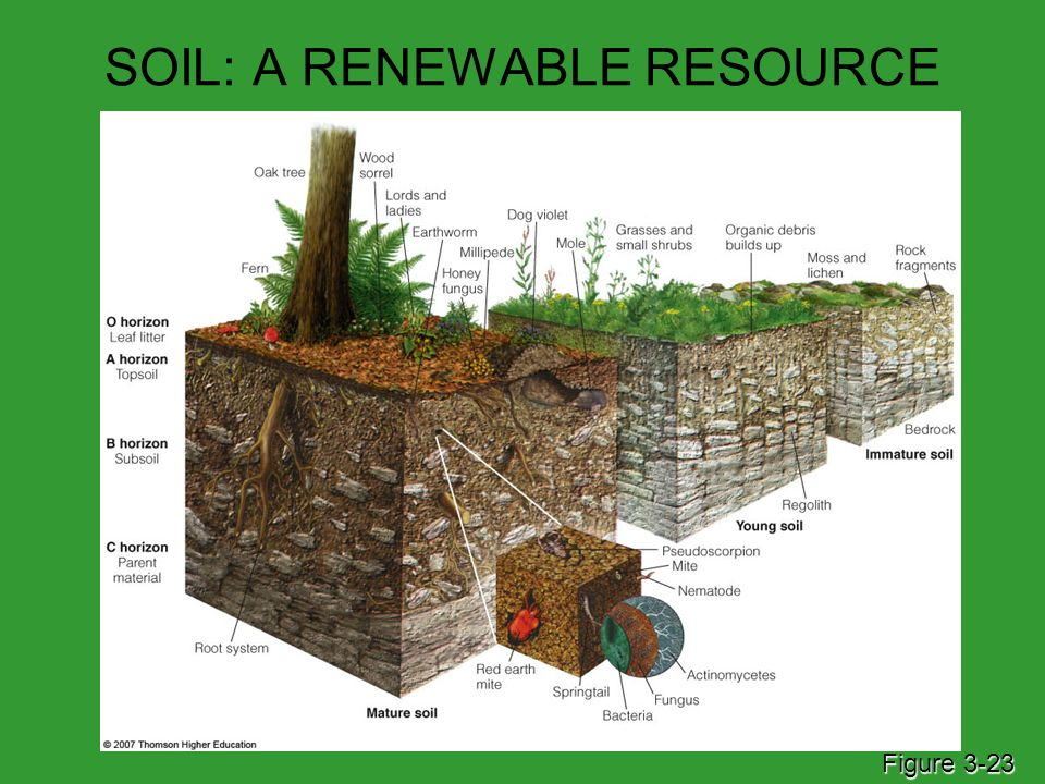 Ecosystems what are they and how do they work ppt download for What is soil resources