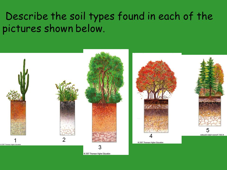 Ecosystems what are they and how do they work ppt download for Describe soil