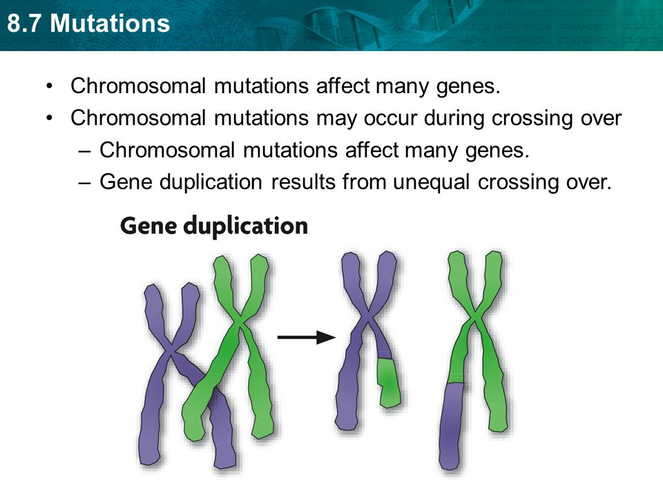 Crossing Over Definition >> A mutation is a change in an organism's DNA. - ppt video online download