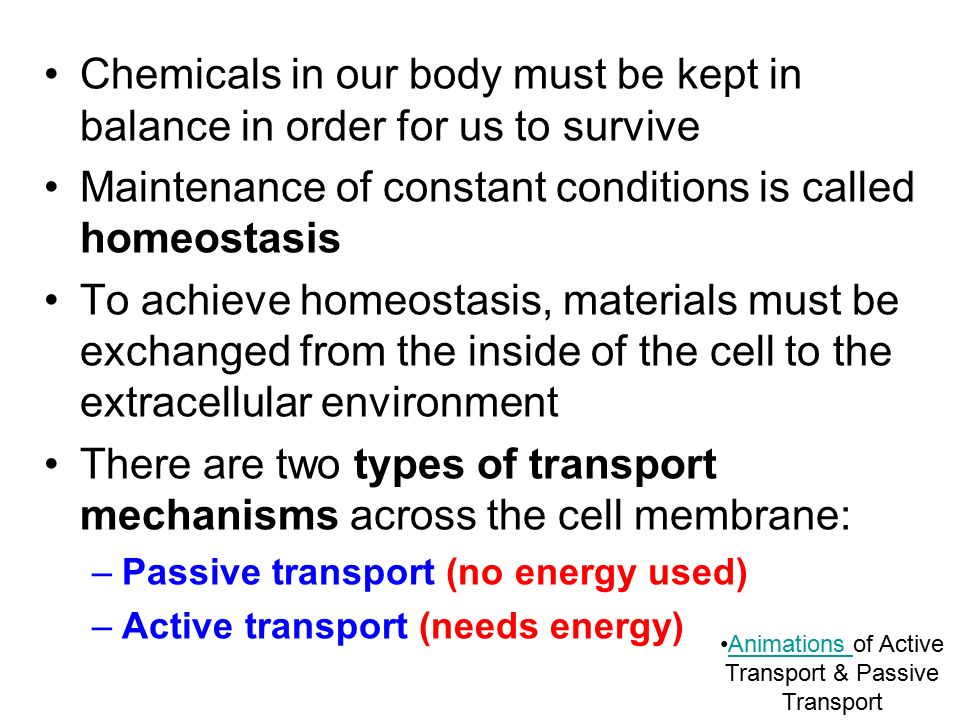SBI4U Movement Across the Cell Membrane - ppt download
