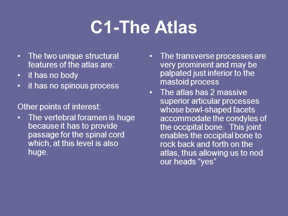 C1-The Atlas The two unique structural features of the atlas are: