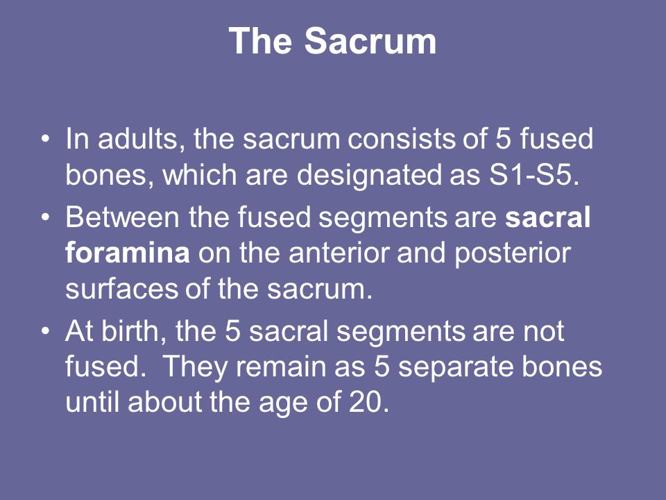 The Sacrum In adults, the sacrum consists of 5 fused bones, which are designated as S1-S5.