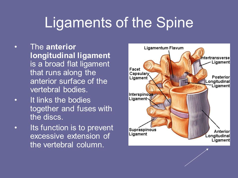day 5 boney landmarks and structure of the vertebral