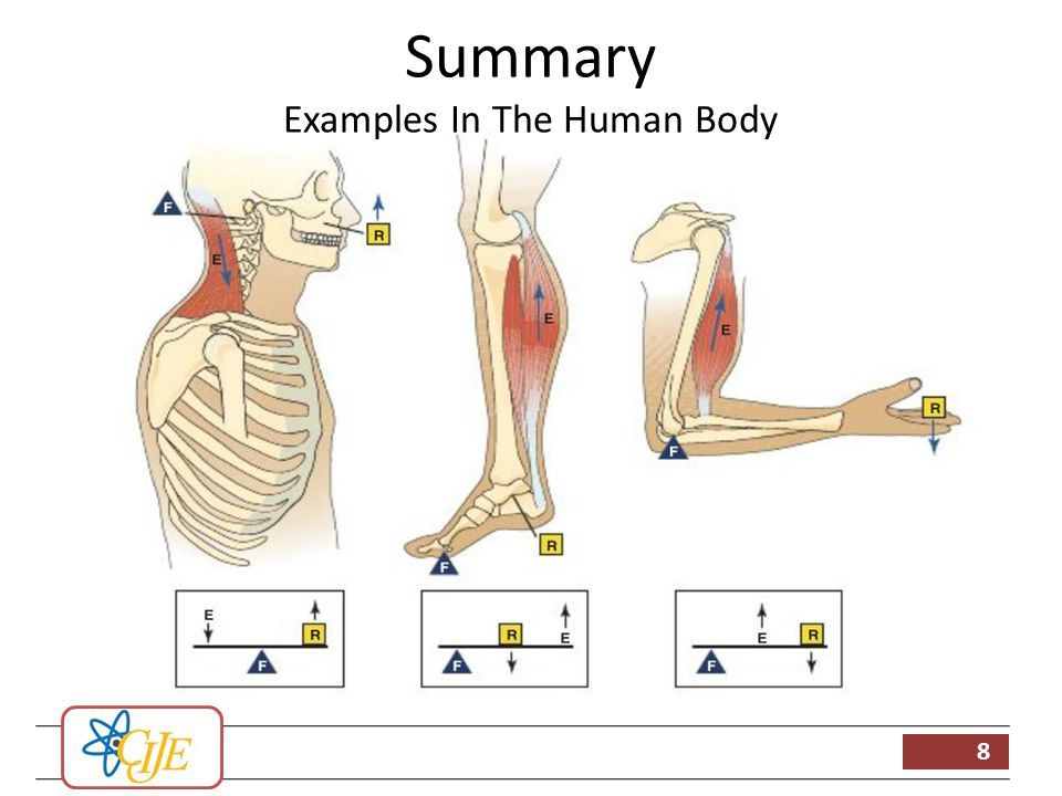 an overview of the hemophelia in the human body Genetics overview anatomy of our genes the human body the human body is made of some 50 trillion to 100 trillion cells, which form the basic units of life and.