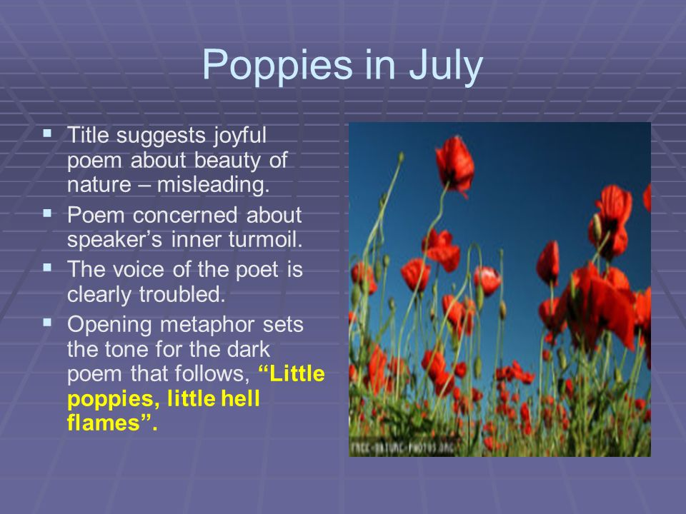 poppies in july sylvia plath 'poppies in october' although this poem gives a nod to plath's own suicide attempts (the last of which, of course, tragically, was successful) in its reference to a woman in an ambulance whose heart is likened to the flowering poppies, it is, first and foremost, a poem in celebration of the bright red flowers.