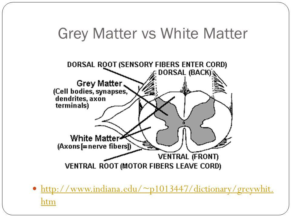 Grey Matter vs White Matter
