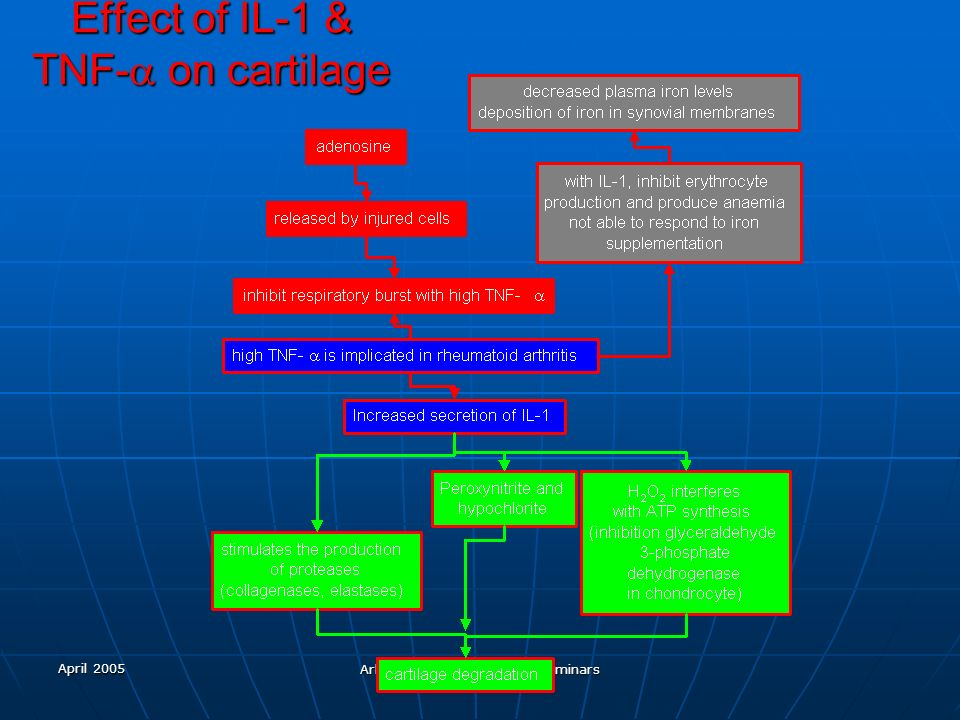 Effect of IL-1 & TNF-a on cartilage