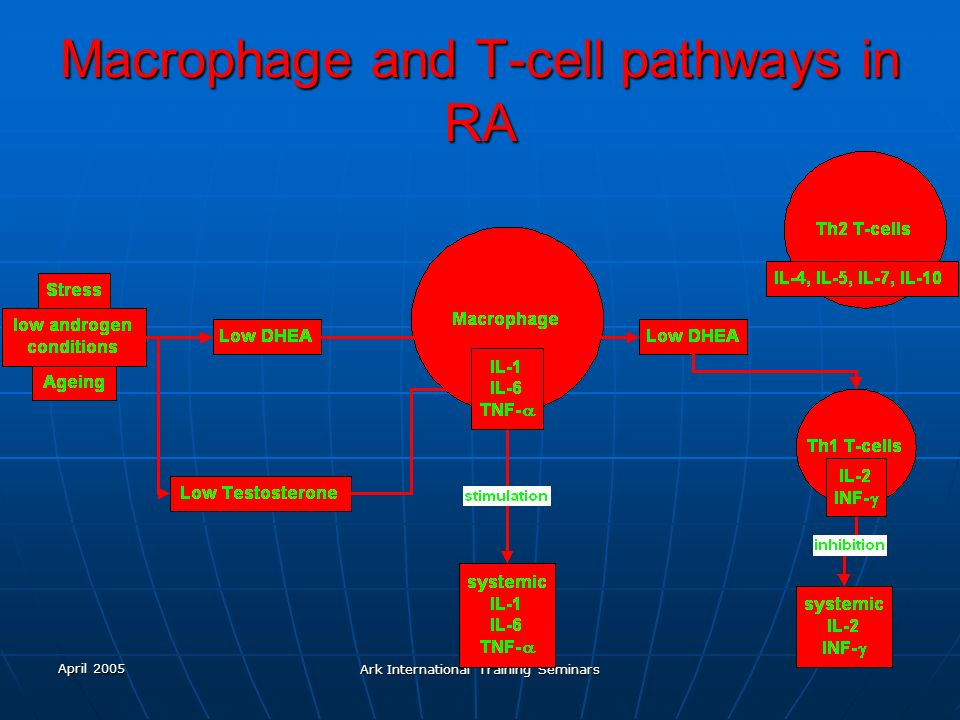 Macrophage and T-cell pathways in RA