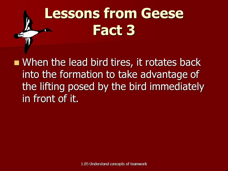 Lessons from Geese Fact 3