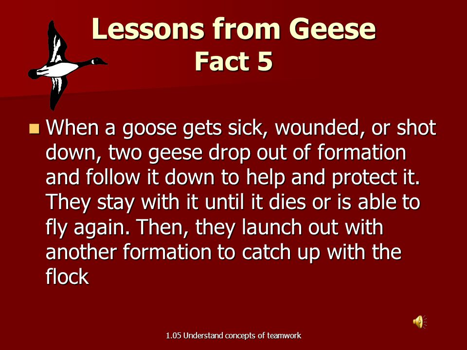 Lessons from Geese Fact 5
