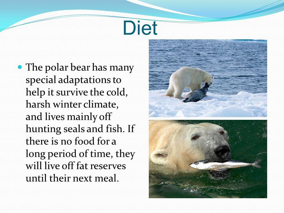 A Polar Bear's Diet