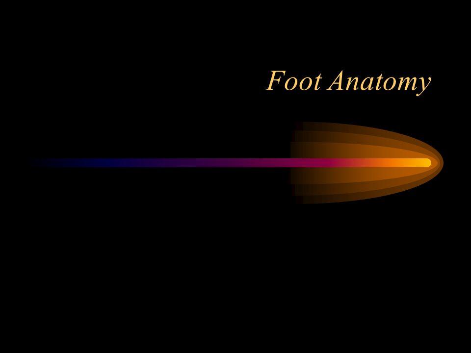 Foot Anatomy Ppt Video Online Download