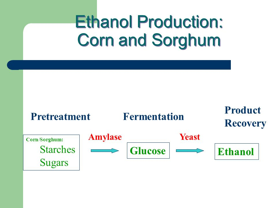 Ethanol Production: Corn and Sorghum