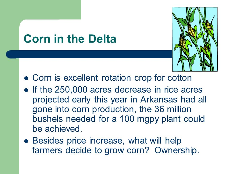 Corn is excellent rotation crop for cotton
