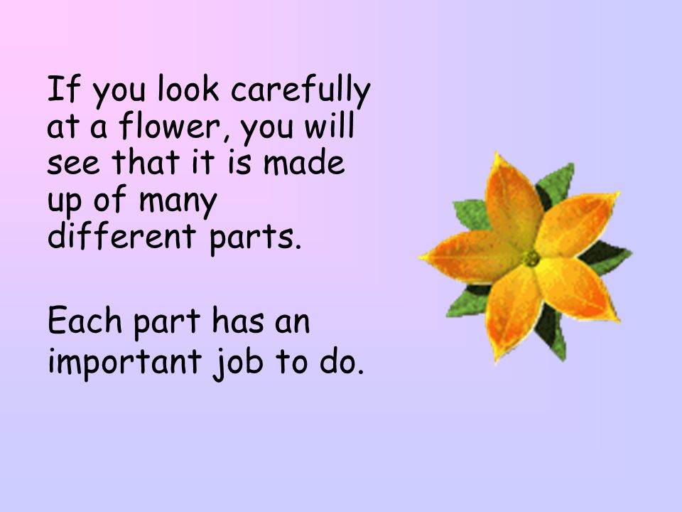 If you look carefully at a flower, you will see that it is made up of many different parts.