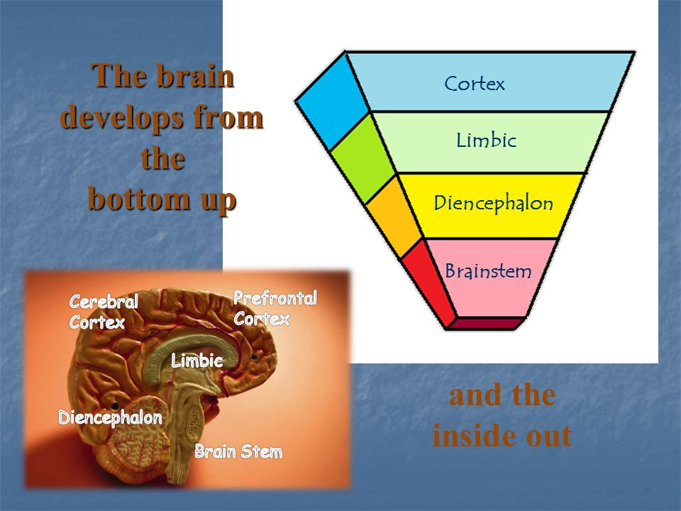 how to develop baby brain in the second year