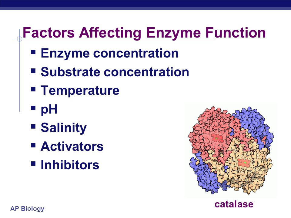 an analysis of the factors that effects the rate of reaction of the enzyme catalase Analysis and conclusions graphs conclusions 4 factors that affect enzyme reaction rate essay factors affecting the rate of catalase activity the extent at which environmental factors affect the rate of catalase activity was discovered in this lab.